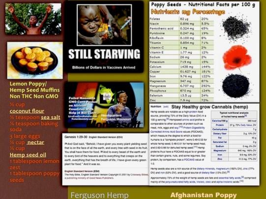 1 Ferguson Syllabus Hemp copy