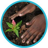 child-hands-gardening