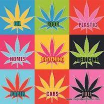 Pot weed hemp fuel clothes KOCH copy