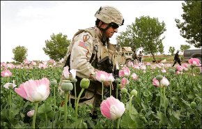 LASHKAR GAH, AFGHANISTAN - APRIL 01: (FILE IMAGE) U.S. Army Col. Paul Calbos walks through an opium poppy field on April 1, 2006 near Lashkar Gah in Helmand province in southern Afghanistan. European cities risk higher numbers of heroin overdoses as Afghanistan's record opium poppy crop floods cities with the drug, the UN has warned. (Photo by John Moore/Getty Images)
