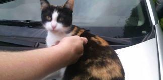 Zaginął kot wczasowiczki wypoczywającej w Ustce - ustka24.info