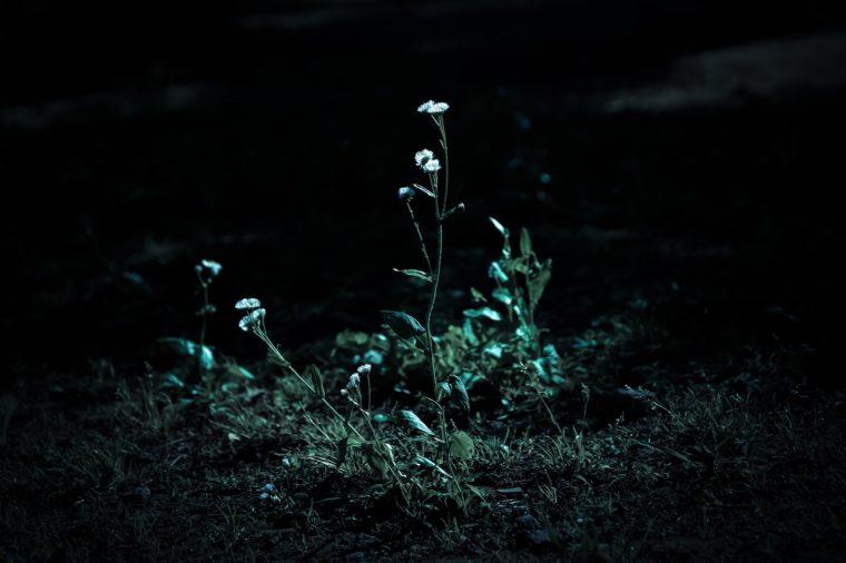 暗闇の中一筋の光に咲く花