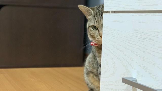 家具の影から半分顔を出す猫