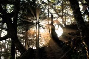 朝日に照らされる森の中