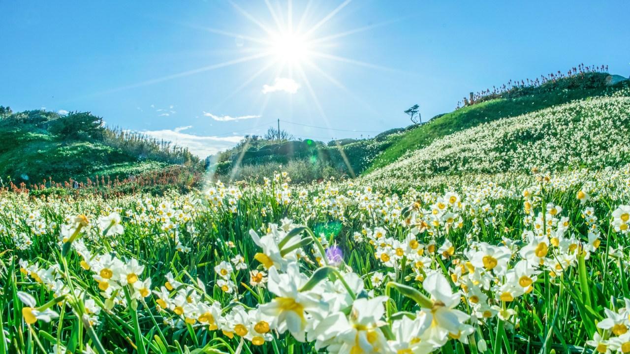 強い日差しお花