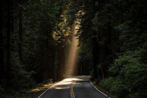 木々の間から木漏れ日に照らされる道路