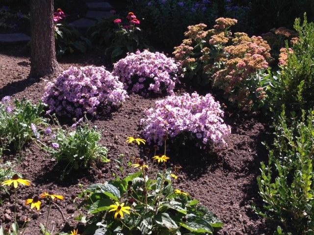 Pollinator Garden 1