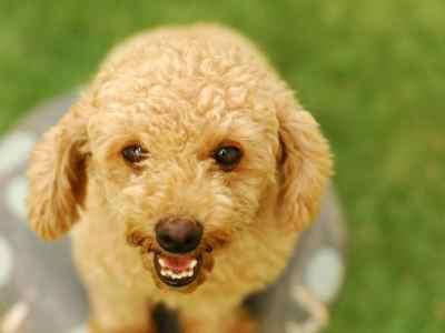 Adopt a furry friend at Best Friends NKUT Super Adoption event.