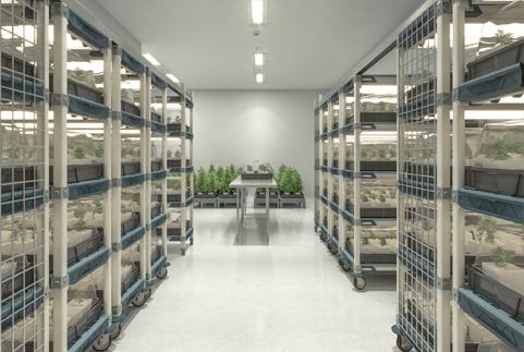 medical marijuana storage systems