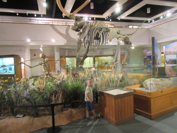 Wooly Mammoth is the center of the archeology side of the museum.