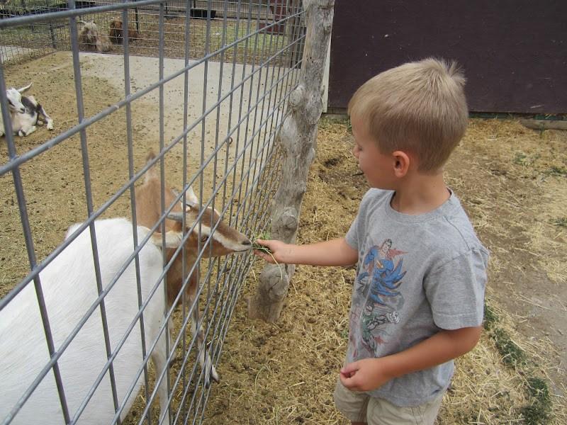 wheeler historic farm - Wheeler Farm Halloween