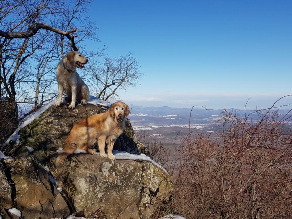 Kutyával a Mátrában
