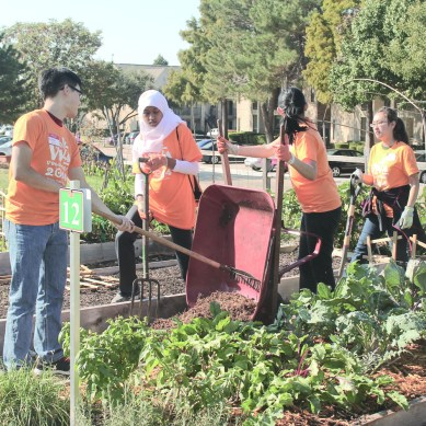 Students dedicate day to volunteering for Dallas orgs