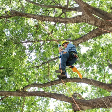 Trees tagged to monitor health