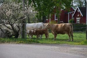 Några av invånarna i Anderstorp