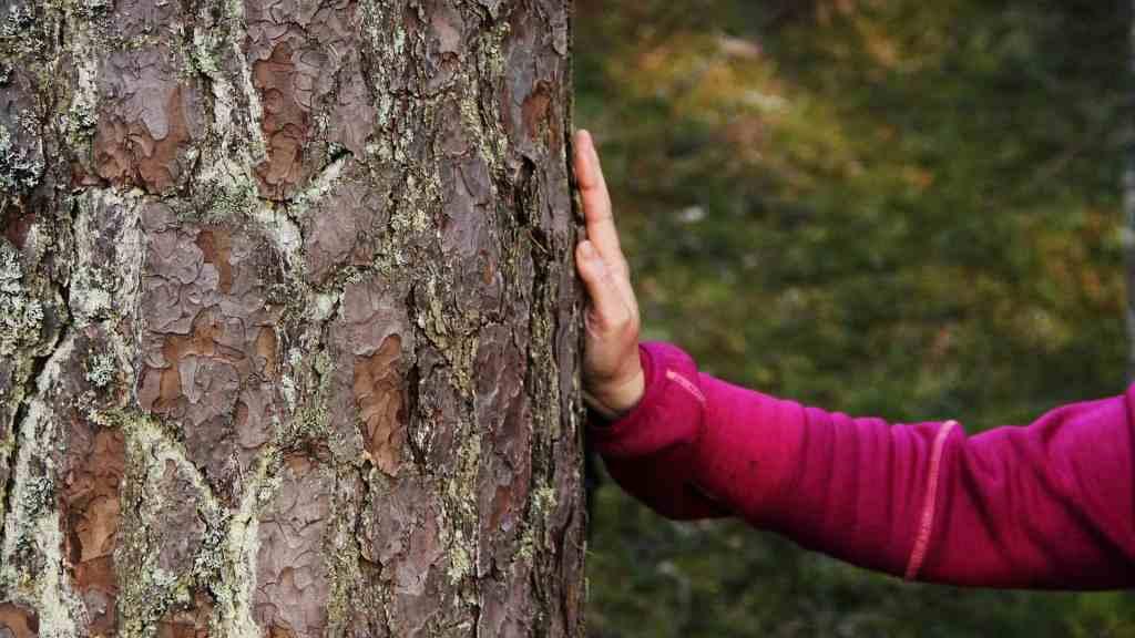 Hand som klappar ett träd