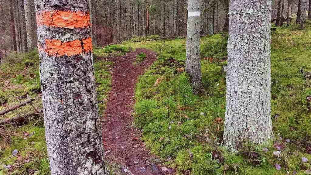 En stig är en bra metafor för hur vi kan må bra i vardagen.