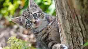 Vill du må bra? Lär av katterna!