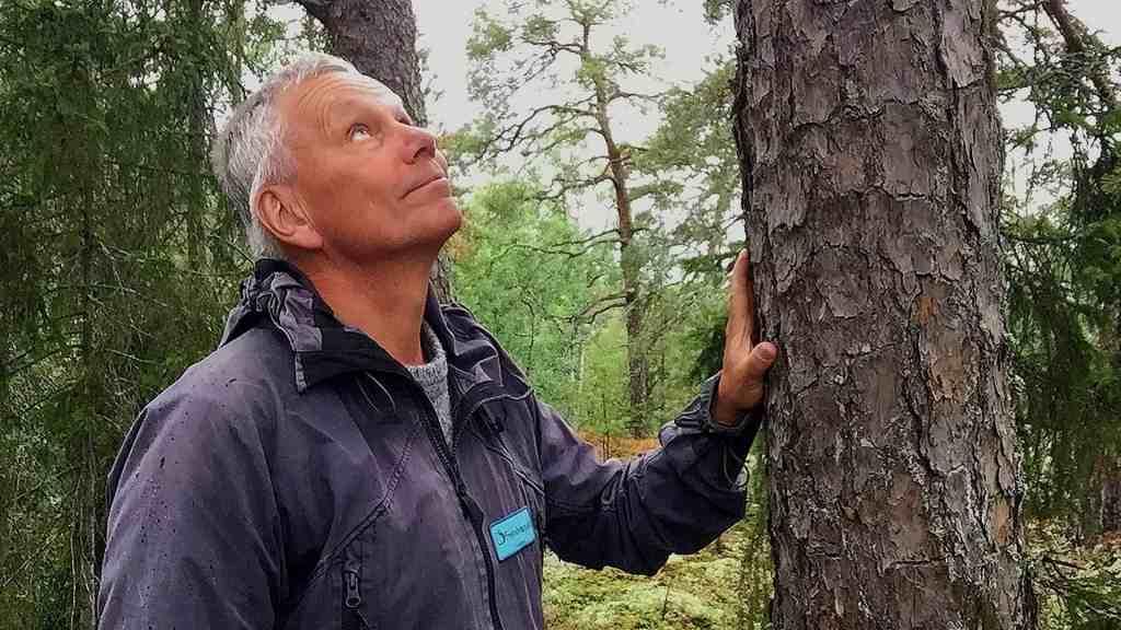 """Skogsbad innebär att """"bara vara"""" i skogen med alla sinnen. Det får dig att må bra."""