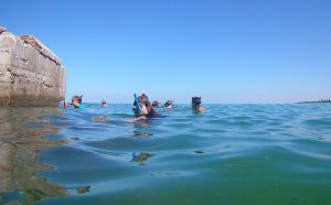 Honors students snorkeling at Egmont Key