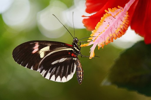 butterfly on a leaf