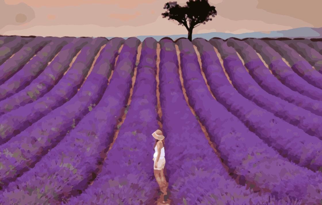 Lavender Field by Utravlr