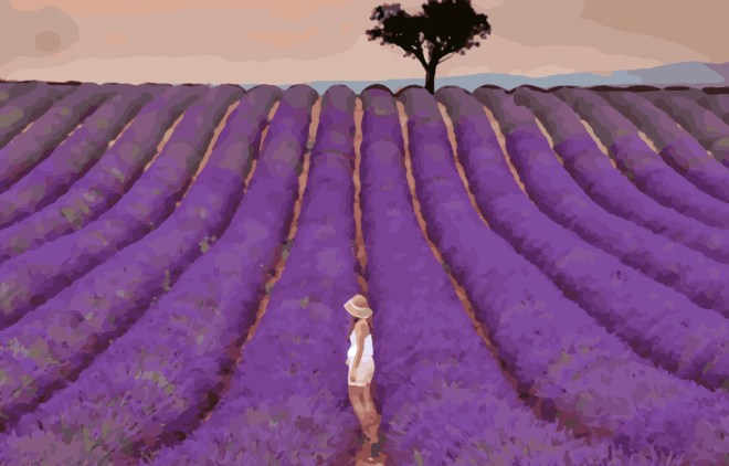 Lavender Field by Utravlr