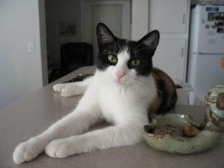 Callie, 2010