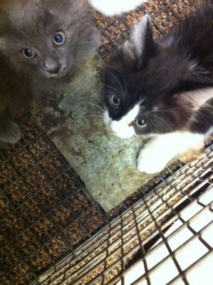 Rex & Lizz, Grey Mama's Kittens