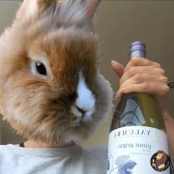 Freya enjoying a Pinot.