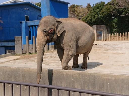 象のアイちゃん