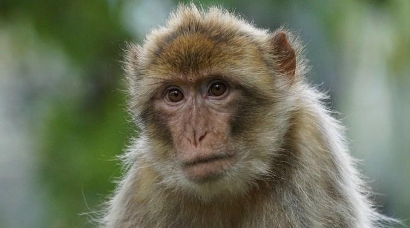 चौनलिया के विद्यालयों में बंदरों का राज 12