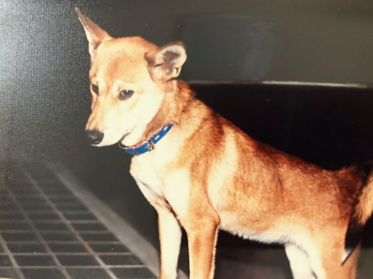 dog-John Blues(おまえの夜は寒くないかい?)