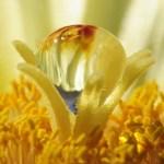 drop of water in a flower