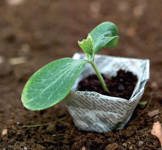 Picture of a seedling.