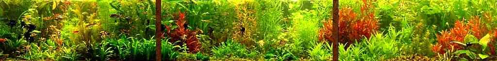 Приемы работы с растениями в нефорсированном травнике