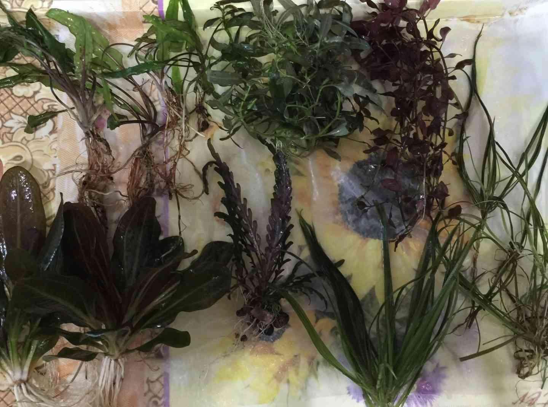 Как сохранить растения вне аквариума
