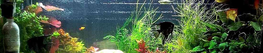 Перезапуск аквариума с рыбами