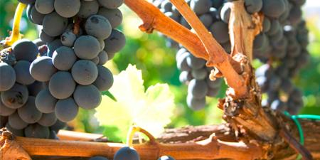 À propos des vins en importation privée