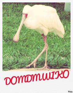 Domdmwiko