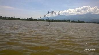 Lubarika-RDC: Un hippopotame égaré fait terreur aux habitants du village de Lubarika