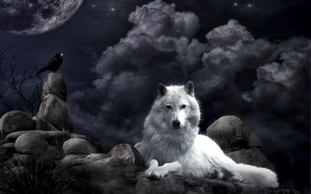 wolf-black-fantasy-hd