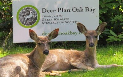BC Approves Funding for Oak Bay/UWSS Deer Management Project