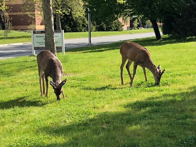 One deer, two deer, three deer…more?