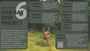 Oak Bay Deer Infographic