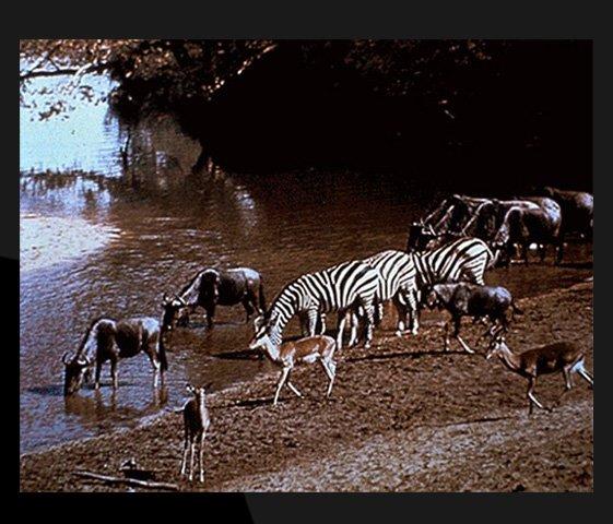 Dünyadan sayısız hayvan fotoğrafıda bulunmakta, onlardan biri.