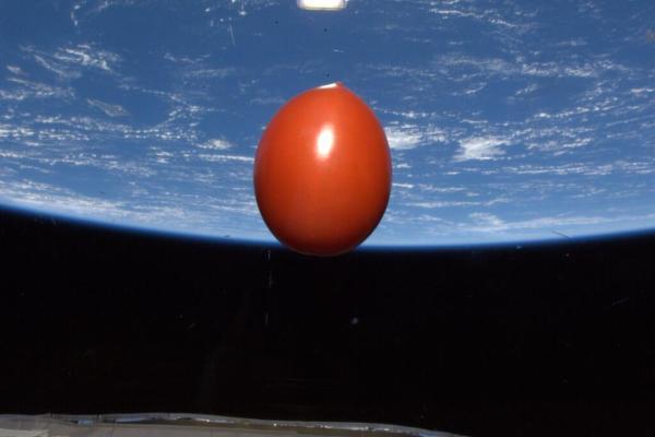UzayDomatesi