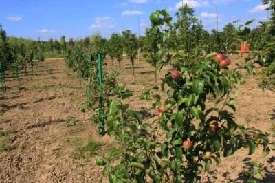 Правила посадки плодово-ягодных деревьев и кустарников