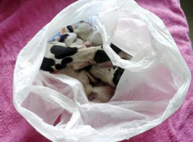 Он спас собаку, которая держала пакет в зубах. А когда заглянул внутрь, то чуть не расплакался!
