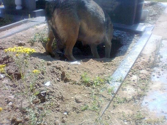 Все думали, что эта собака скорбит по своему хозяину, пока не увидели, что находится под ней
